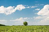 дерево и области — Стоковое фото