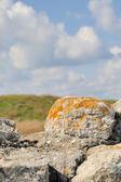 古い石 — ストック写真