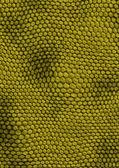 Snakes texture green — Stock Photo