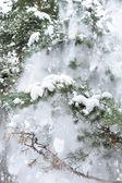 Kürk ağaçta kar — Stok fotoğraf