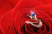 Sparkle ring in a red rose — Stock Photo
