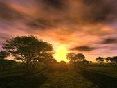 Sunset trees — Stock Photo