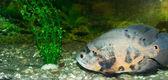 Der fisch 3 — Stockfoto