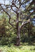 Tree alone 2 — Stock Photo