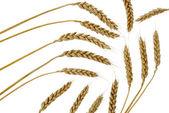 Wheat set abstract — Stock Photo