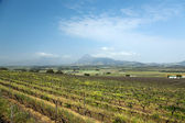Vineyard or winery in South Africa — Stock Photo