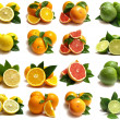 Stock Photo: Citrus for all tastes