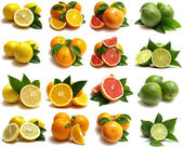Citrus for all tastes — Stock Photo