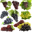 Stock Photo: Grape fruits