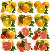 オレンジ、グレープ フルーツ — ストック写真