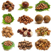 Wood nuts — Stock fotografie