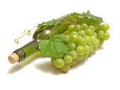 Grape wine — Foto de Stock