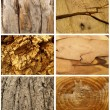 Stock Photo: Texture tree