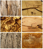 Texture tree — Stock Photo