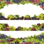 Grape fruit — Stock Photo #6688629