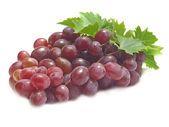 Grapefrukt — Stockfoto