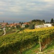 View on vineyard in northern Italy. — Stock Photo
