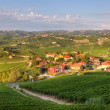 View on vineyards in northern Italy. — Stock Photo #5894035