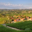 View on vineyards in northern Italy. - Stock Photo