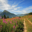 Photo: Fields and meadows in Alps.