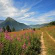 campos e prados em Alpes — Foto Stock
