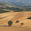 Panoramic view on vineyards and fields in Italy. — Stock Photo #6369091