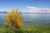View on Lake Garda in northern Italy. — Stock Photo