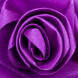 Purple Satin Rose - Stock Photo