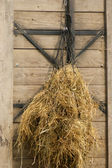 Hay as forage hung in a net — Stock Photo
