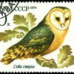 Vintage postage stamp. Owl barn owl. — Stock Photo #5382086