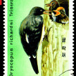 Stockfoto: Vintage postage stamp. Oreal spreading White-Bellied Black Woo