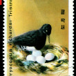 Vintage postage stamp. Oreal spreading White-Bellied Black Woo — Stock Photo #5440448