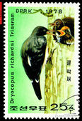 Vintage postage stamp. Oreal spreading White-Bellied Black Woo — ストック写真