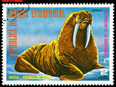 Vintage postage stamp. Walrus. — Stock Photo