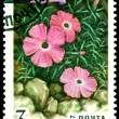 Vintage  postage stamp.  Dianthus Repena. — Stock Photo