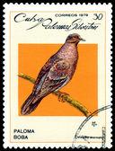 复古邮票。天鸽座藻. — 图库照片