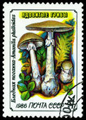 Vintage postage stamp. Amanita phalloides. Toadstool. — Stock Photo