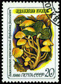 Vintage postage stamp. Hipholoma fasciculare. Toadstool. — Stock Photo