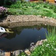 Aquatic garden — Stock Photo