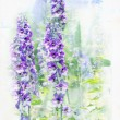 Stock Photo: Watercolored delphinium
