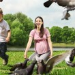Stock Photo: Feeding pigeons