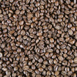 Light Roast Beans — Stock Photo