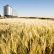Stock Photo: Prairie Harvest