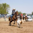 Stock Photo: Calf Roping