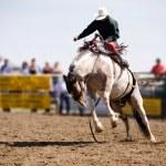 Saddle Bronc — Stock Photo