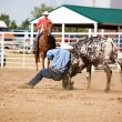 Steer Wrestling - Stock Photo