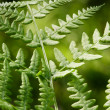 Fern Background - Stok fotoraf