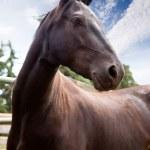 Horse — Stock Photo #5685295