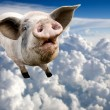 Flying Pig - Stock Photo