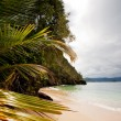Tropical Beach — Stock Photo #5688960